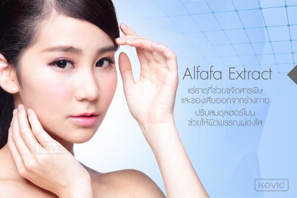 Alfafa Extract ส่วนประกอบอาหารเสริม