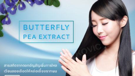 สารสกัดจากดอกอัญชัน (Butterfly Pea Extract) ส่วนประกอบเครื่องสำอาง