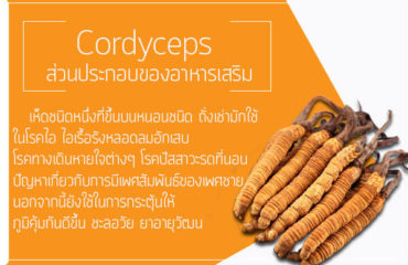 Cordyceps-ส่วนประกอบของอาหารเสริม