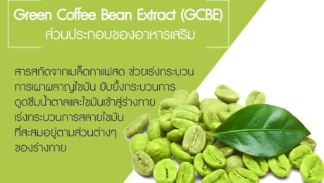 Green-Coffee-Bean-Extract-(GCBE)