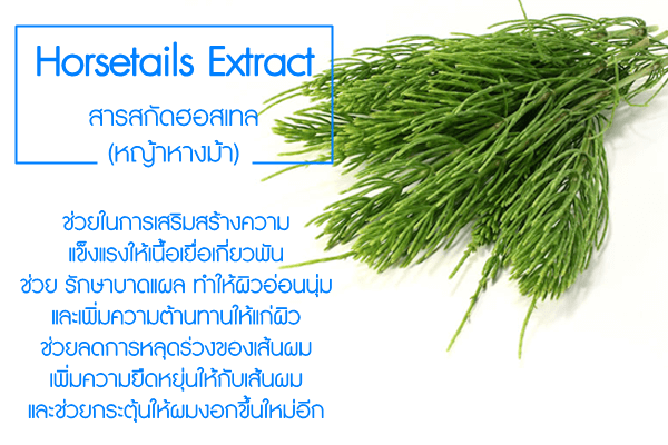 Horsetails-Extract