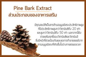 Pine-Bark-Extract-ส่วนประกอบของอาหารเสริม