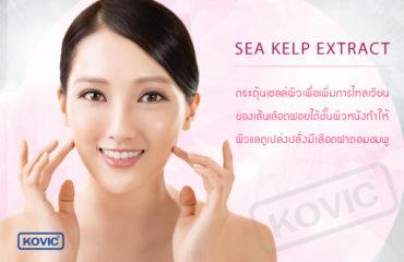 สร้างภูมิคุ้มกันให้กับโครงสร้างเซลล์ (Sea Kelp Extract) ส่วนประกอบการผลิตเครื่องสำอาง